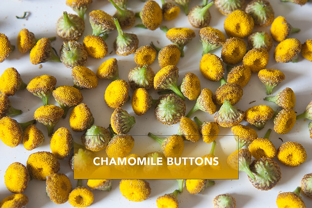 chamomile-buttons-1