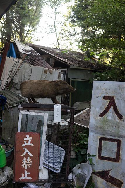 Nishiyama_05