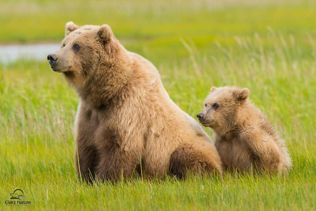 Mother Bear with Cub, Alaska