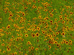 Wild Flowers at Bradford University
