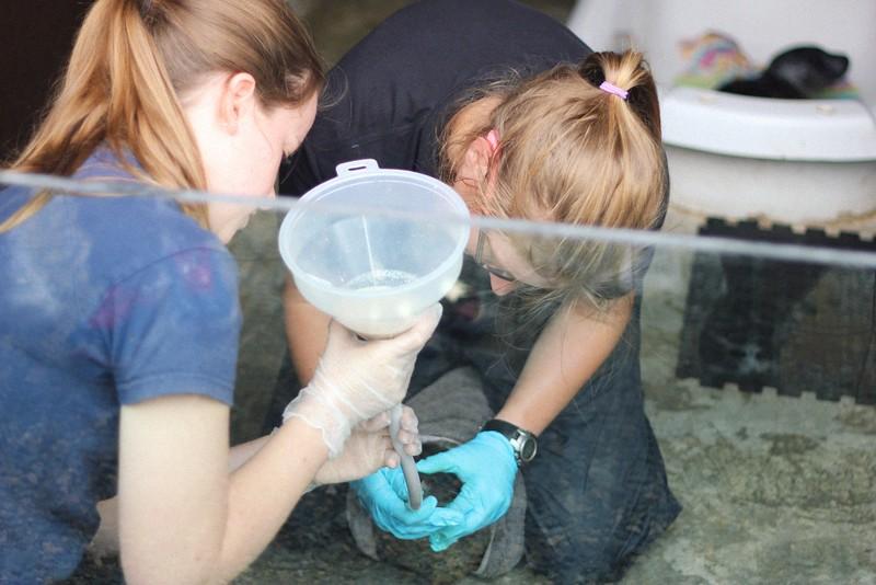 feeding fish soup to seal pups