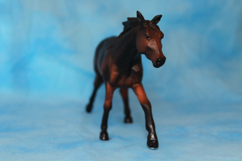 Walkaround of the Mojo Fun Sooty Bay Quarter Horse Stallion 15076534269_5ab2ed047e