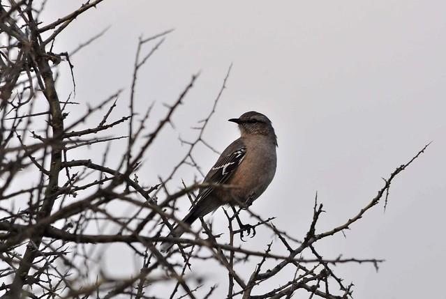 Conesa | Avistaje de Aves