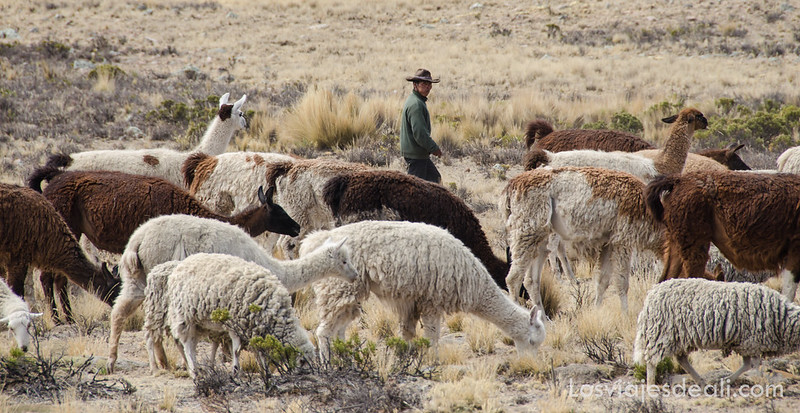 pastor en la pampa peruana