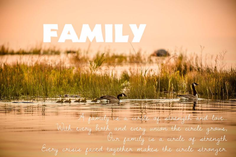 20140606-328C6014-PamelaMcLellanZmija-FAMILY