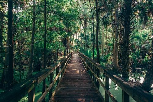 statepark trees silversprings wild tree green forest woods nikon florida hiking palm trail jungle shade swamp boardwalk wilderness d90 wildflorida nikond90 vsco vscofilm