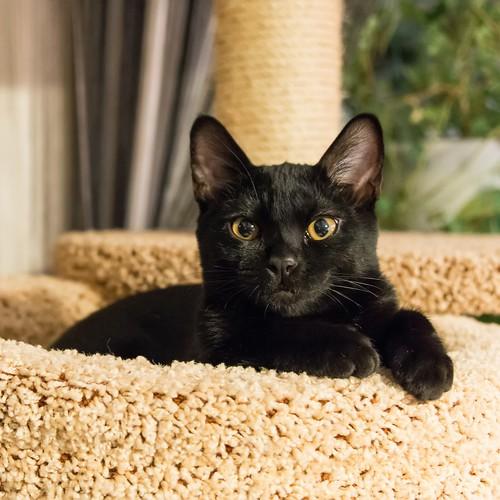 Martin - favorite cat