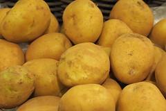 fruit(0.0), vegetable(1.0), potato(1.0), produce(1.0), food(1.0), root vegetable(1.0),