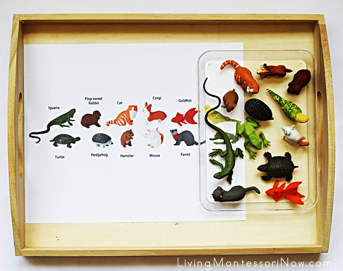 Pet Matching Tray Using Safari Ltd. TOOB Key