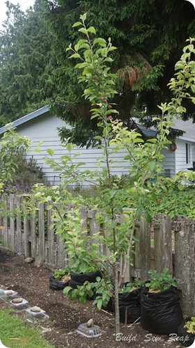 20140603 Garden Update_29