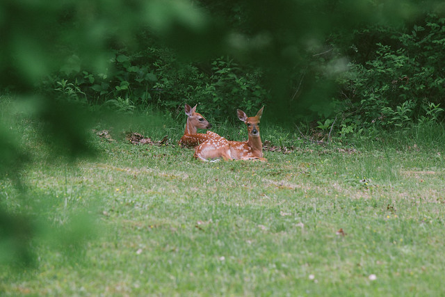 baby deer friends
