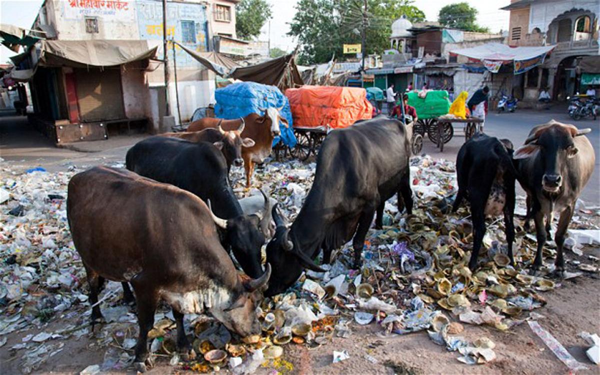 प्लास्टिक खाते जानवर