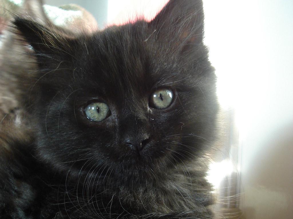 foster kitten Cocoa