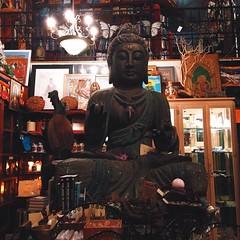 Oh my Buddha  #vscocam #bookshopcorners #Buddha #om #santamonica #losangeles #oldbookstores #spiritual #tw