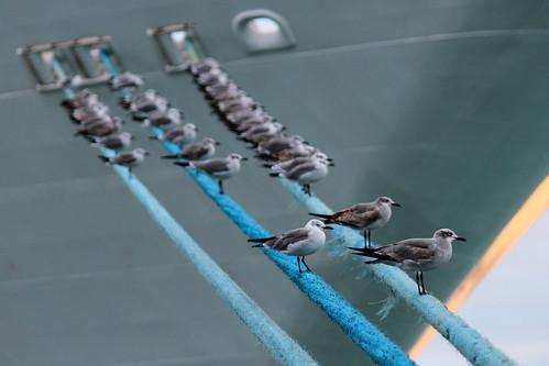 travel usa bird ship florida