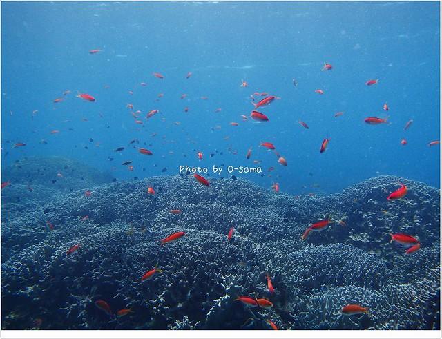ダイビングしないと見れない美しい景色