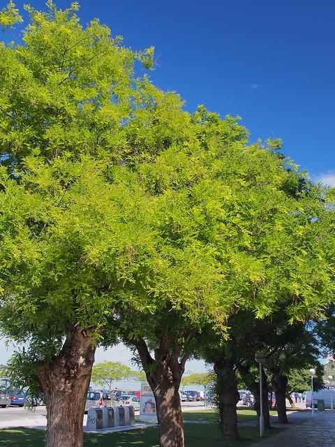 藍天配綠葉, 迎接我們的都是好天氣
