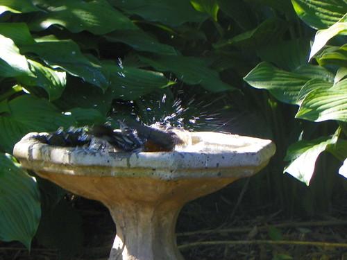 birdbath4