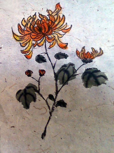 Daphne Chrysanthemums