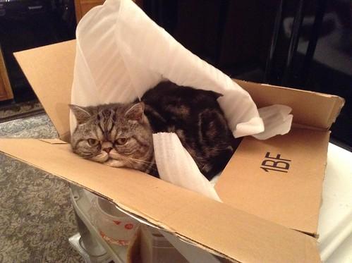 The Box Cat