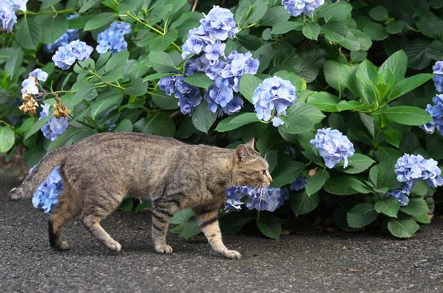 東京路地裏散歩 ネコ 谷中、蔵前、浅草 2014年7月5日