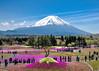 Big Fuji, Small Fuji