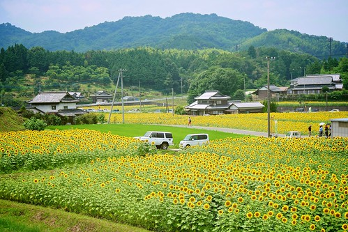 flowers houses mountains car japan landscape sony sunflowers 日本 花 kagawa 山 車 家 風景 向日葵 ヒマワリ 香川 manno apsc a6000 まんのう ©jakejung sel1670z e1670mmf4zaoss α6000 ilce6000