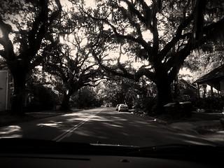 Dark Savannah