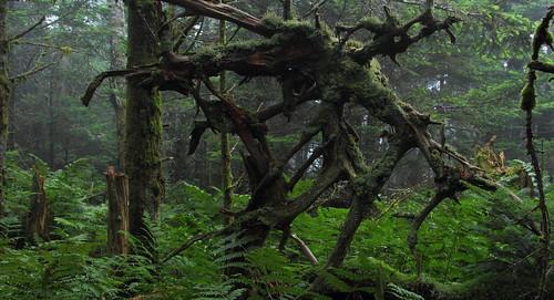 wood horse point climb virginia high mt pointer web peak hike mount trail pony va summit rogers seek 32 shetland