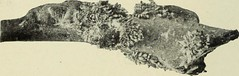 """Image from page 175 of """"Manual of fruit insects"""" (1915)"""