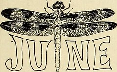 "Image from page 234 of ""St. Nicholas [serial]"" (1873)"