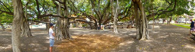 Banyan Tree Park - Lahaina