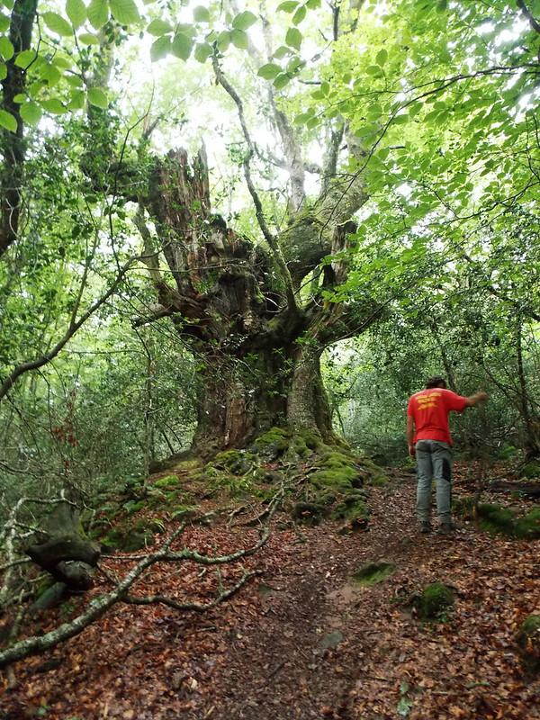Árboles gigantes / Superlative trees