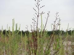 un po' di piante da fiume