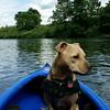 @myurkovich2013 #kiski kuma in kayak. So much fun!