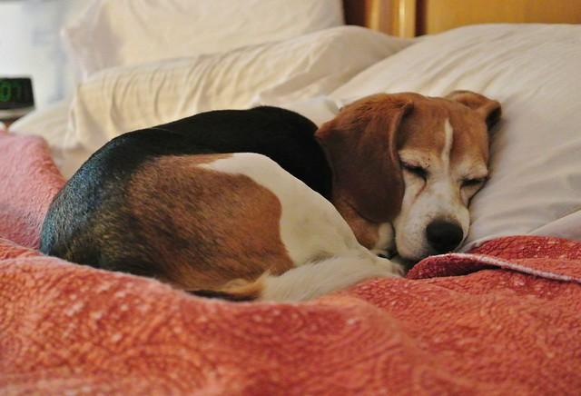 Dog Travel Bed Car