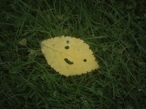 Stewie leaf