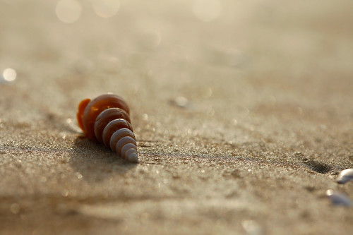 Lonely Seashell On The Beach