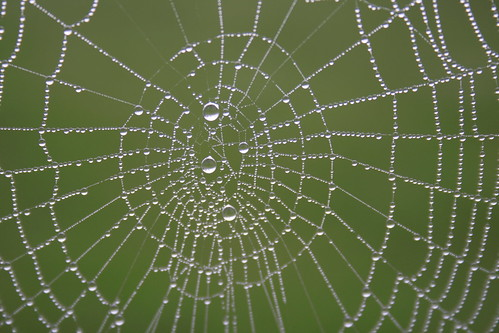 morning wet spiderweb australia dew nsw kangaroovalley pc2577