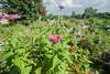 Prairie Commons Community Garden 8.26.14