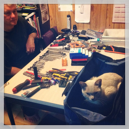 Basil helping sort out the toolbag