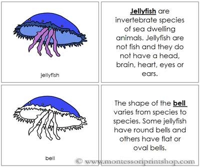 Jellyfish Nomenclature Book from Montessori Print Shop