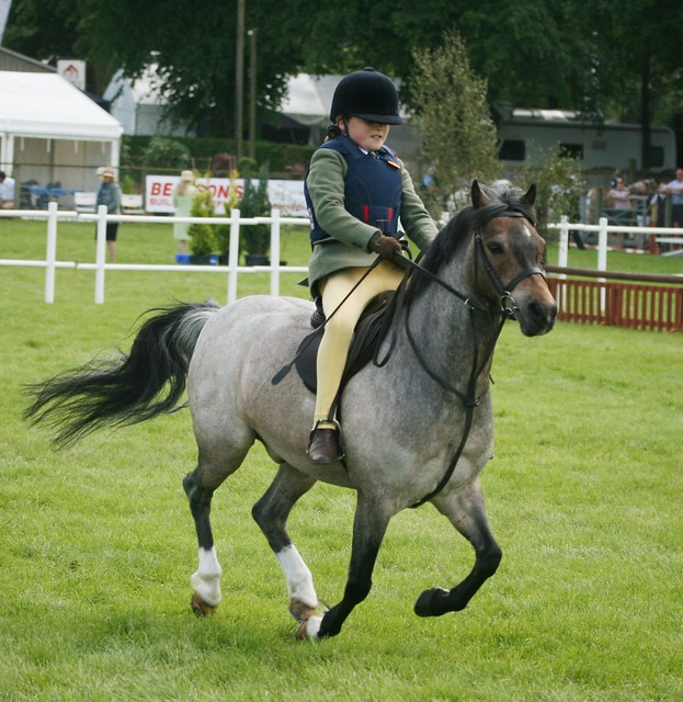 Working Hunter Pony