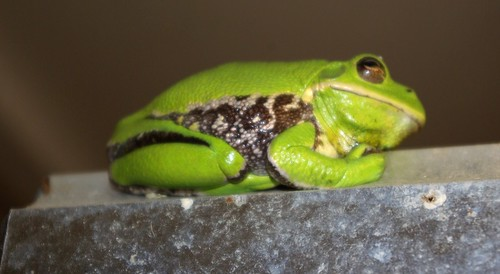 green wildlife amphibian