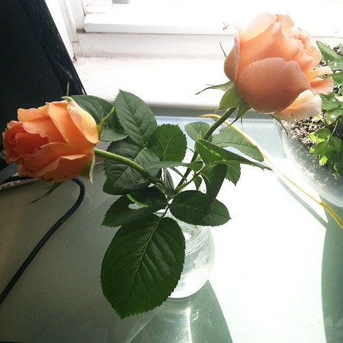 Things that make me smile today - peach roses