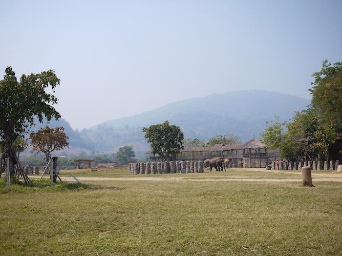 Elephant Nature Park Chiang Mai-16