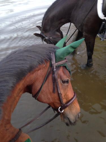 Lake ponies