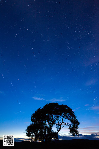 tree silhouette stars trails malham startrails yorkshiredales