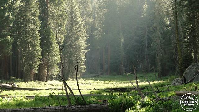 Circle Meadow