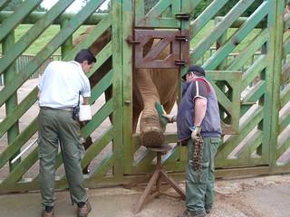 Elefante de Cabárceno